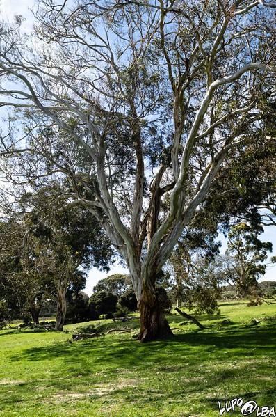 Australia-363.jpg