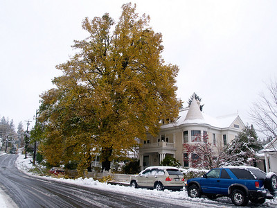 Coho snow, Nov. 21, 2010