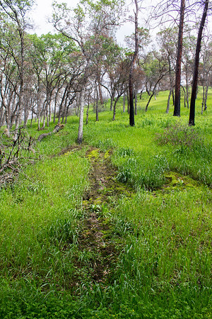 Putah Creek WA