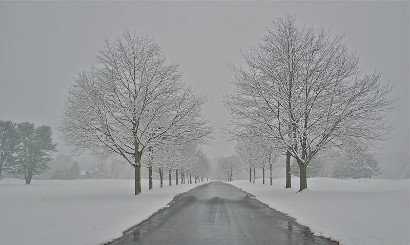 Snowy Journey.jpg