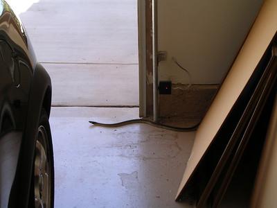 Snake in the Garage on Holly Oak