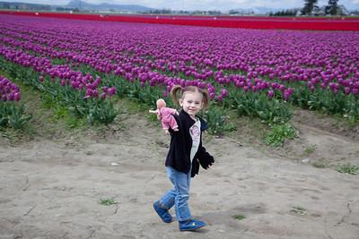 2011_04_30 Washington Tulips