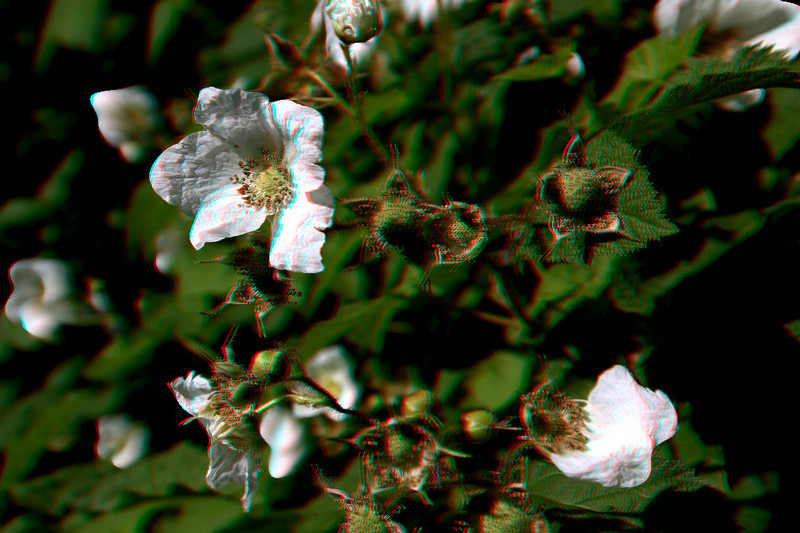WhiteFlowers-3D-anaglyph.jpg