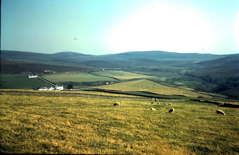 1959-9-5 (36) Scene of farms & moors @ Caithness, Scotland.JPG
