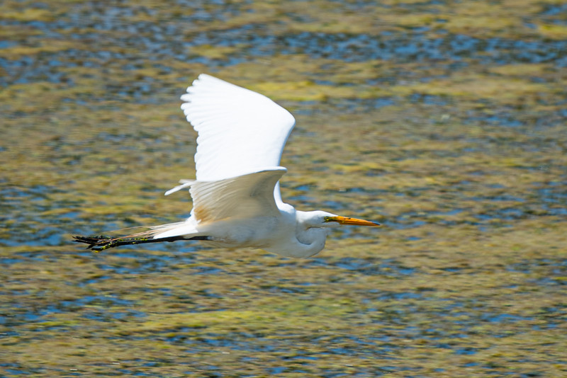 wildlife-110.jpg