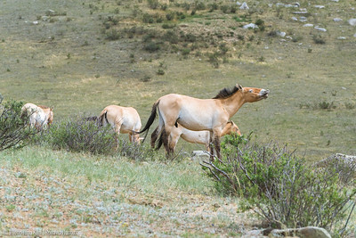 Khustai National Park