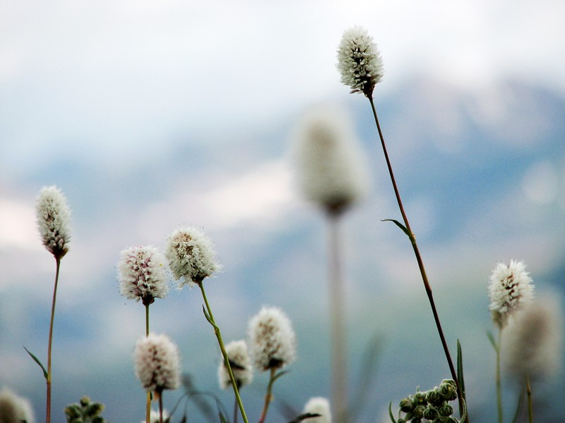 amh FLOWERS (1366).jpg