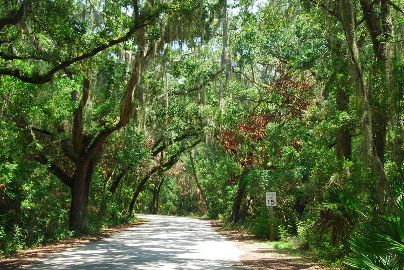 A drive through the Live Oaks on Ferandina Beach, FL