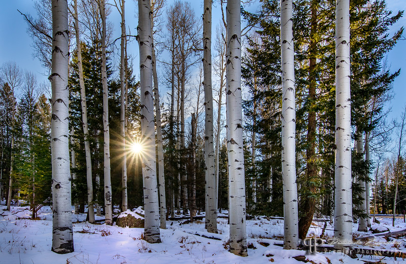 Morning Birch by Premier Photography USA.jpg