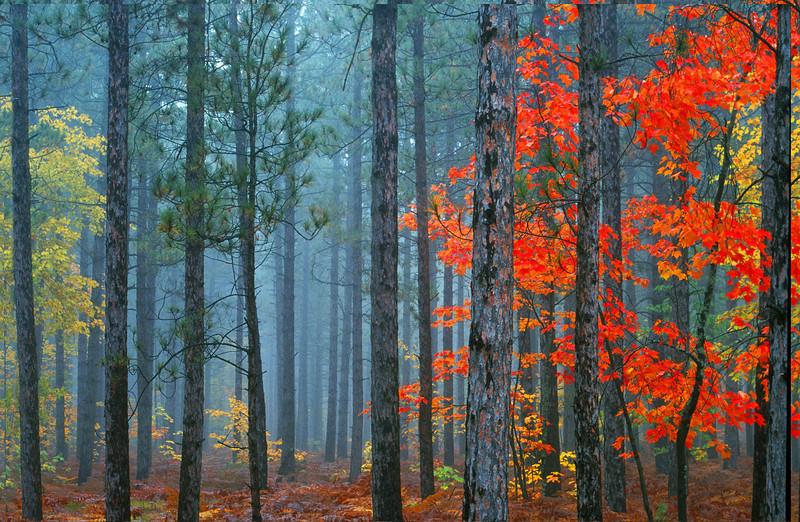 Foggy trees, Michigan