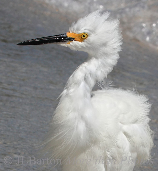 Bad Hair Day at the Beach
