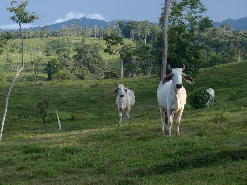 homestay pasture.JPG