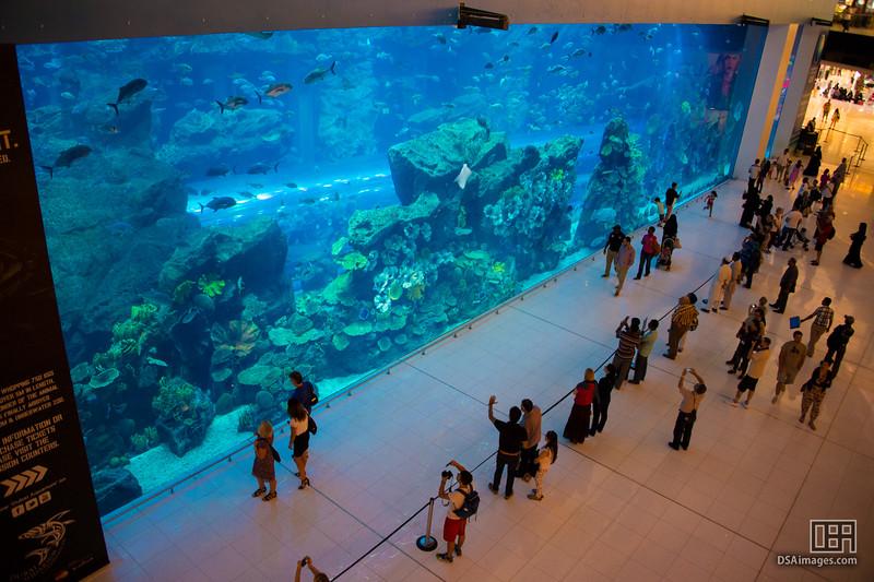 Dubai Aquarium and Underware Zoo