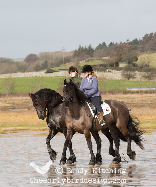 Friesian Experience beach ride feb 2015