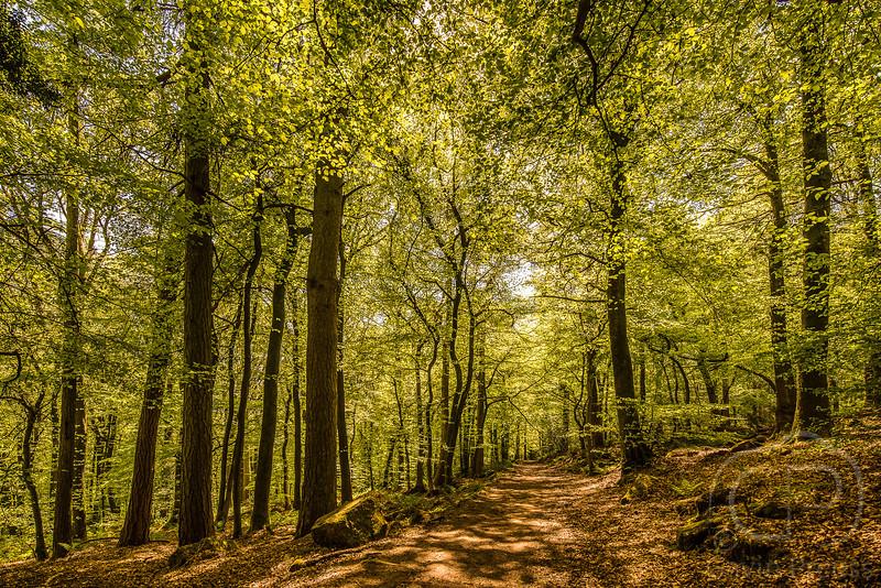 Forest-9373.jpg