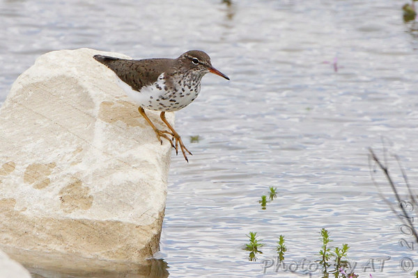 2013-04-17/19 Riverlands Migratory Bird Sanctuary