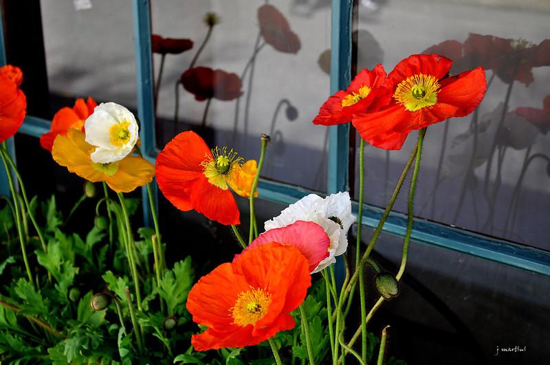 window box 6 4-17-2012.jpg
