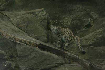 Bronx Zoo w/ Andrew & Christina