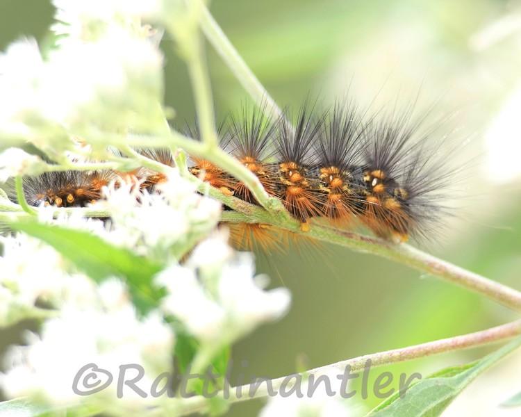 Caterpillar092211_001.jpg