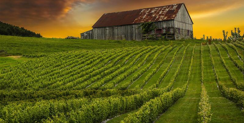 vine-farm7.jpg