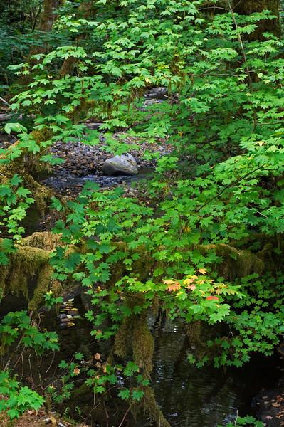 Keller Creek Picnic Area