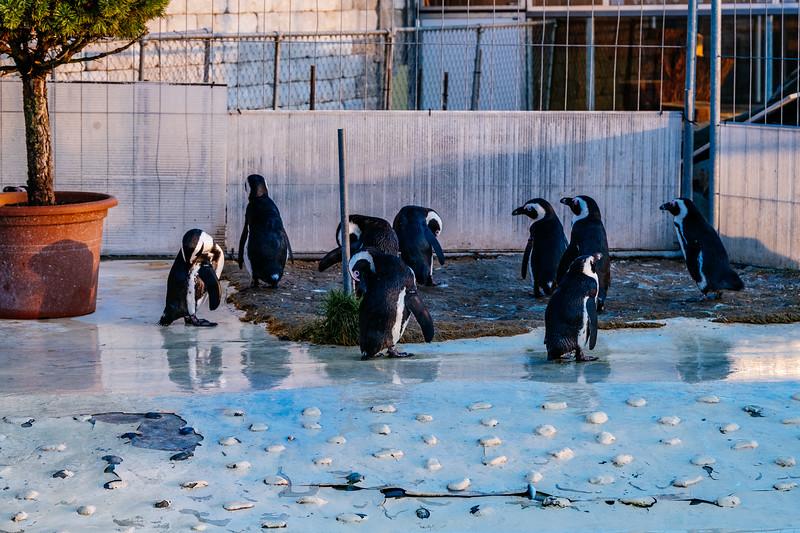 Tonis Zoo-0400.jpg