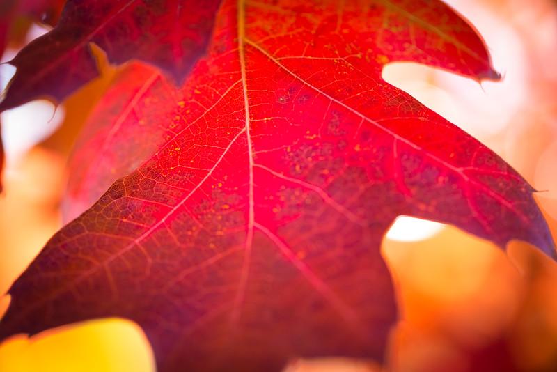 20151024-Fall Colors-70.jpg