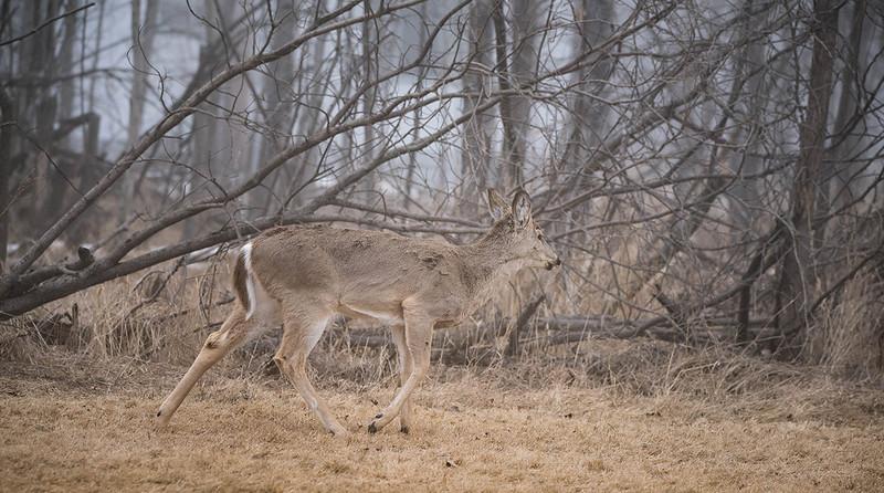 April 15 2016 deer.jpg