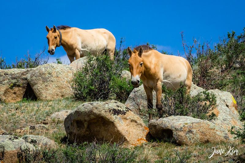 Kustei National Park__6109339-Juno Kim.jpg