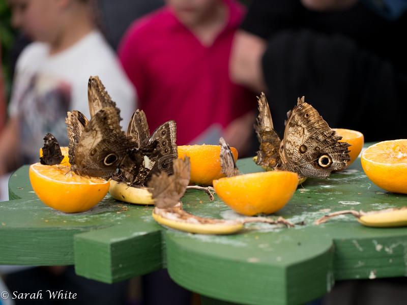 140503_ButterflyHouse_451.jpg