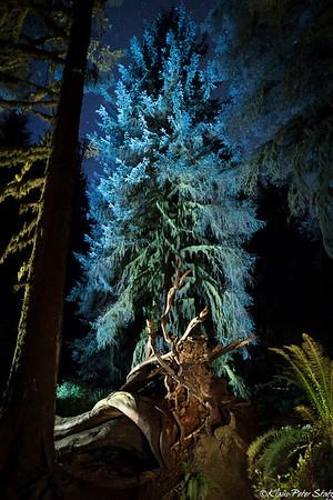 7- Hoh Rainforest