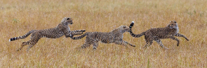 Kenya 2015-07815.jpg