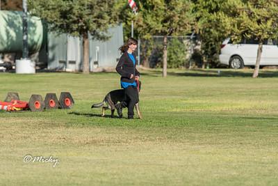Pacific Coast Working Dog Club Oct 2016 Trial