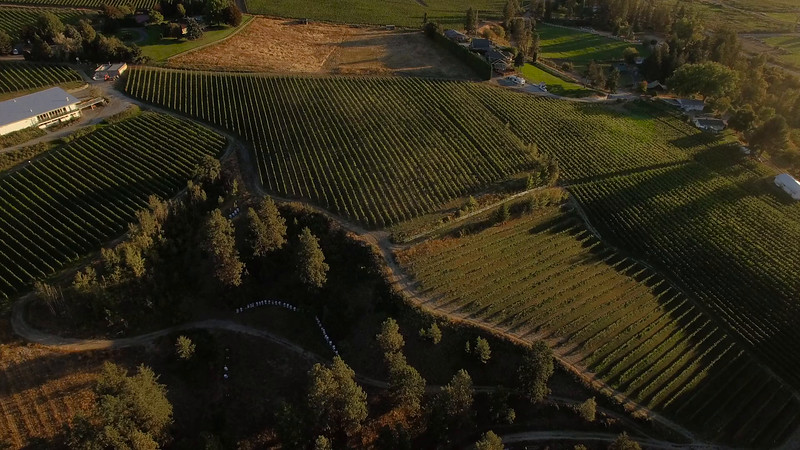 WINES OF BC BROLL3_ Vineyard overview.mov