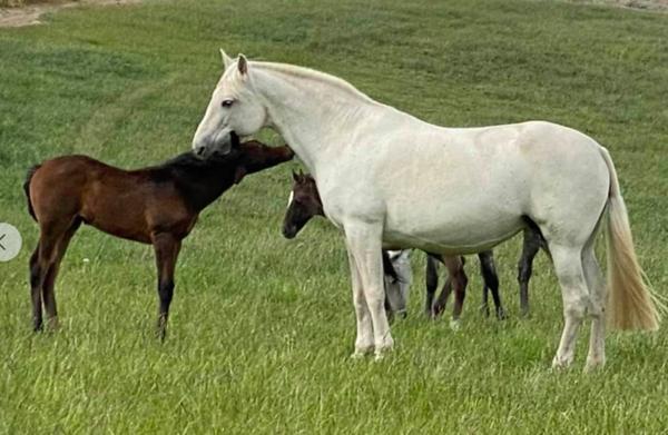 Foal #6 FILLY    Preciosa X Kianto