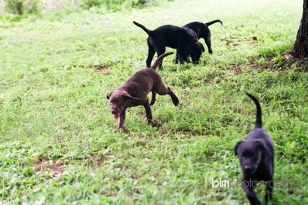 Webber Puppies 7.21.15