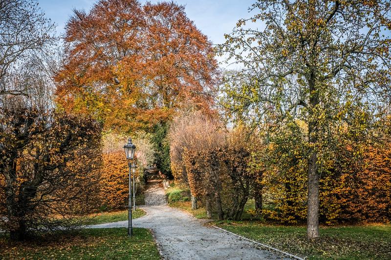 brevnov stromy-001.jpg