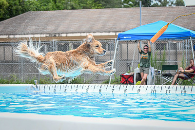 Ocala Dock Diving Event