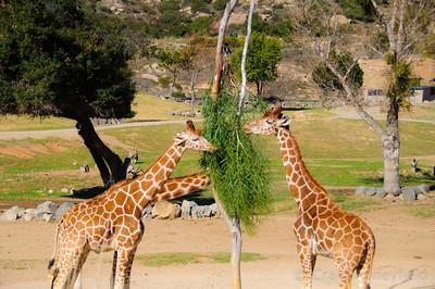 Wild Animal Park 2011