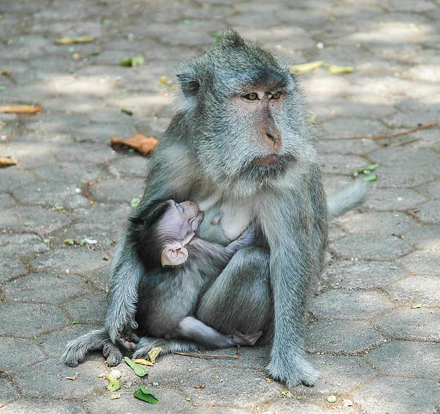 Monkeys-7.jpg