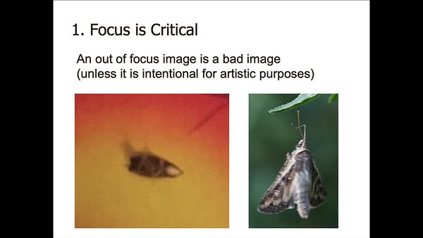 4H Insect Photography Tips