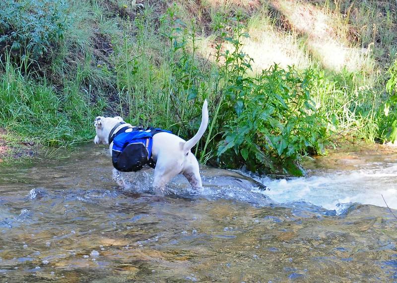 NEA_5567-7x5-Water Dog.jpg