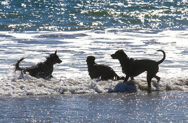 Kaylee, Carly & Caitlin at Coronado beach.