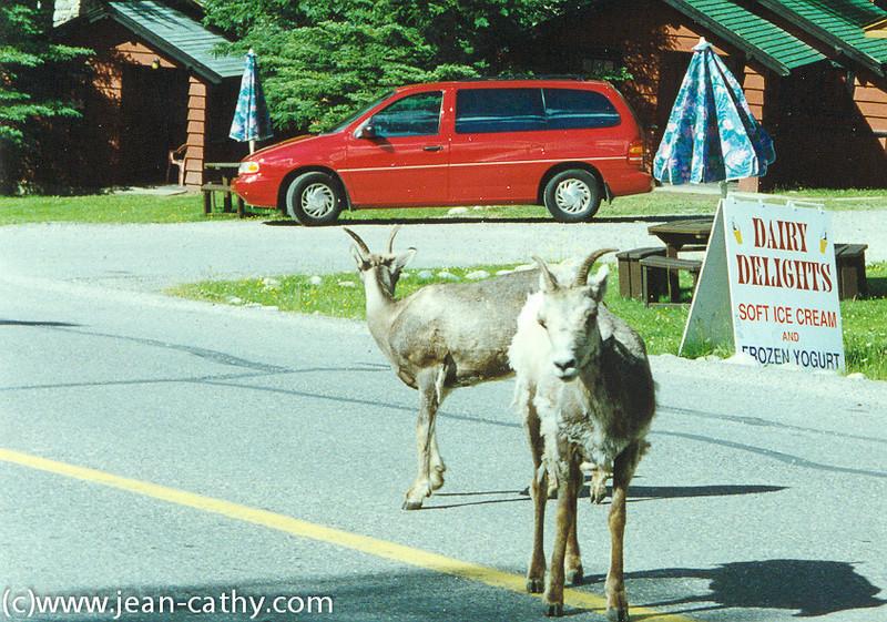 Alberta 1996 -  (3 of 33)