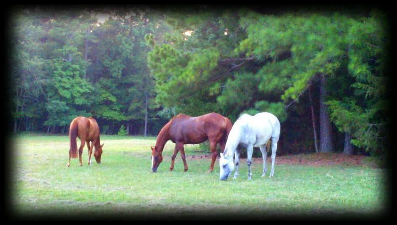 2011-07-11_20-10-07_136_edit0.jpg