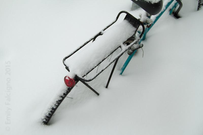 Snow Stand  02-08-15