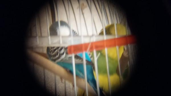2015-01-06, Rusik and Vita the parrots through a spyglass