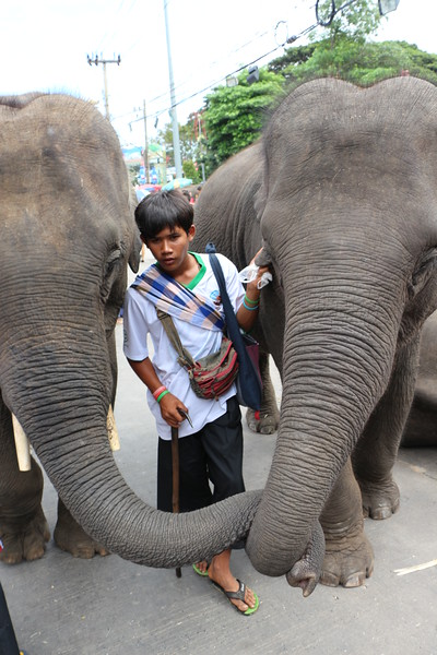 2014-11-14 Surin Elephant Welcome Feast 719.JPG