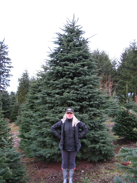 Christmas Tree Shopping 2014