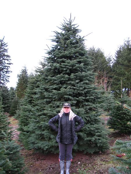 Christmas Tree Shopping 2014